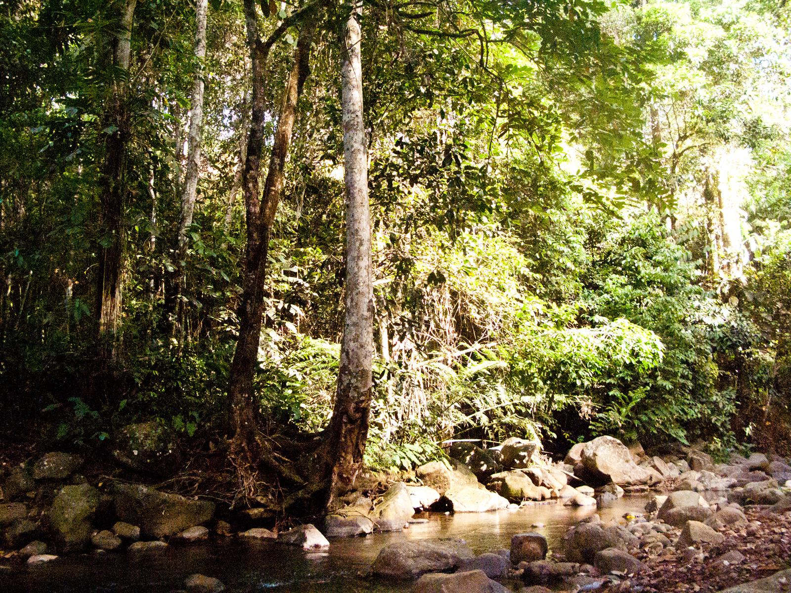 river-river-tree